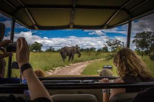 """Okavango Delta, Botswana, 2008"" Bruce Rosenstiel STOCK"