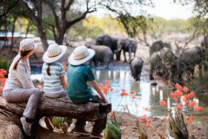 stock-family-safari