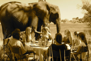 picnicking with elephants blog 3