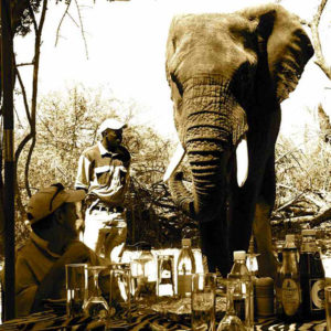 picnicking with elephants blog