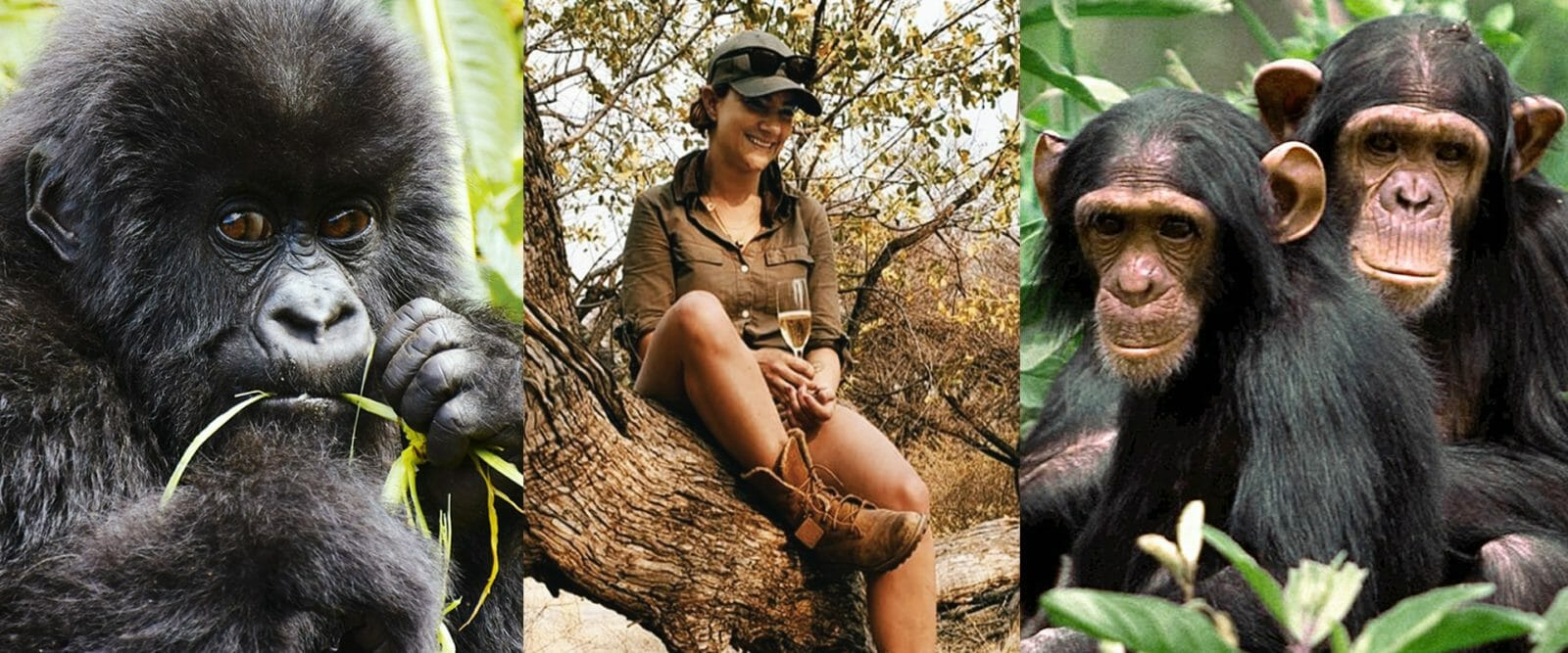 Gorilla Trekkeng Safari Danni