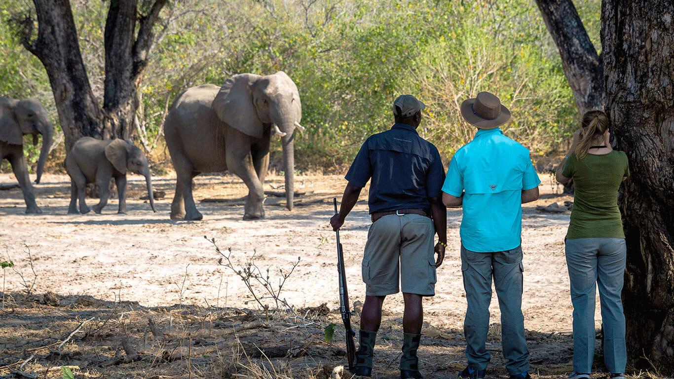 'Walking safari Mana pools'
