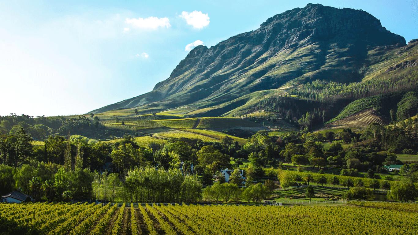 'Cape Winelands view'